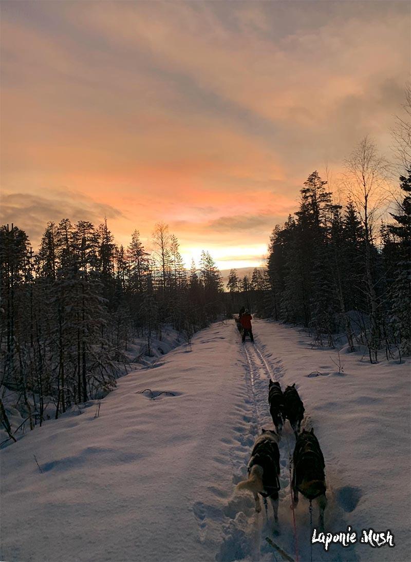 randonnée en chien de traineau en laponie suedoise sous le coucher de soleil