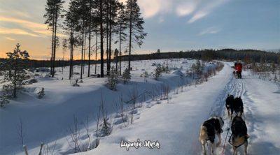 randonnee en chien de traineau sur les collines de laponie suedoise