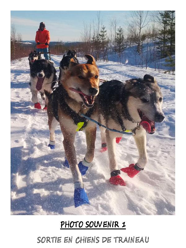Initiation en traineau a chiens en sejour multi activités
