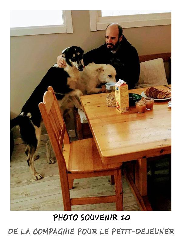 Petit-Déjeuner chez Laponie Mush en compagnie des chiens
