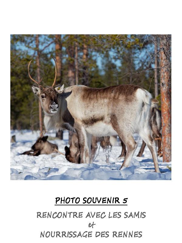 Rencontre avec les Samis et nourrissage des rennes en Laponie