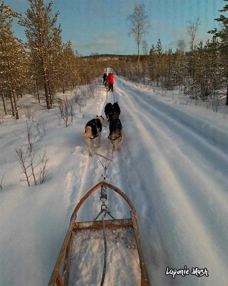 Initiation a la conduite de chien de traineau