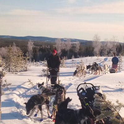 sejour d'hiver en laponie suedoise, randonnée en traineau à chiens sur les hauteurs