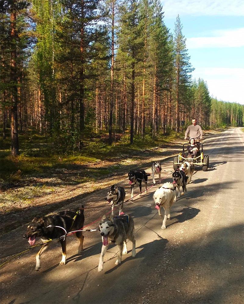 sortie estivale en cart a chien de traineau en Laponie suedoise