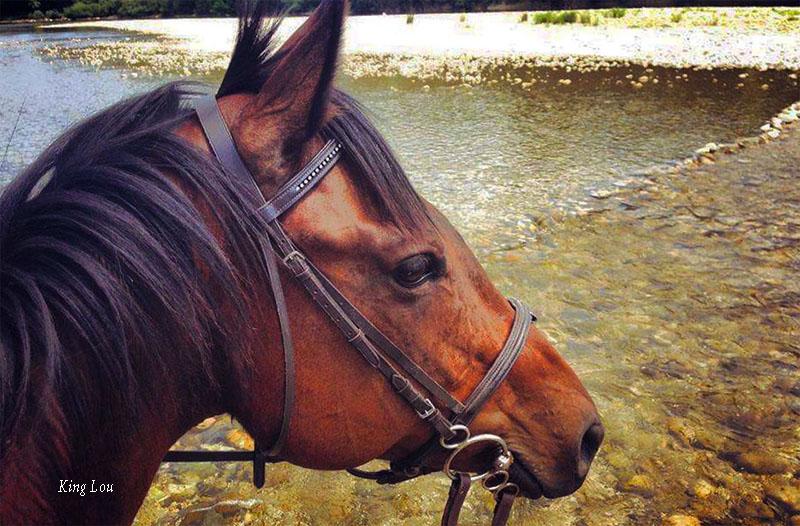 Séjour d'été et randonnée à cheval en laponie suédoise