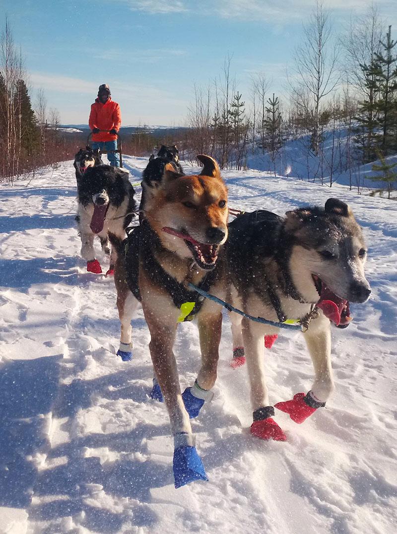 Séjour d'hiver et randonnée en chien de traineau en Laponie Suédoise