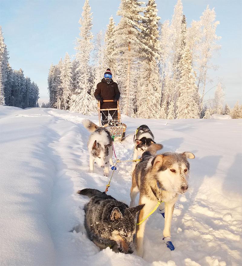 Sortie en traîneau à chiens hiver en Laponie Suédoise