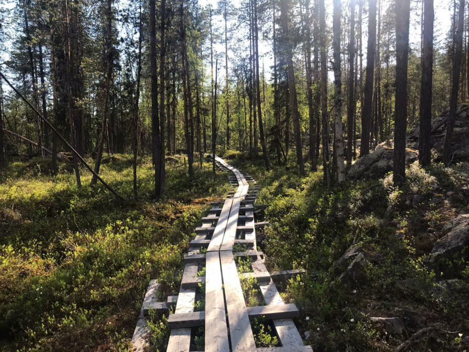sentier dans le parc naturel du mudus en laponie suédoise